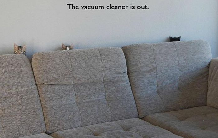 the vacuum cleaner is out, cats hiding behind the couch