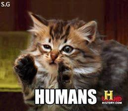 humans, cat doing the history channel, ancient aliens meme