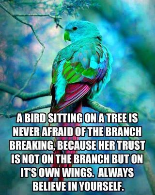 a bird sitting on a tree is never afraid of the branch breaking because her trust is not on the branch but on its own wings, always believe in yourself