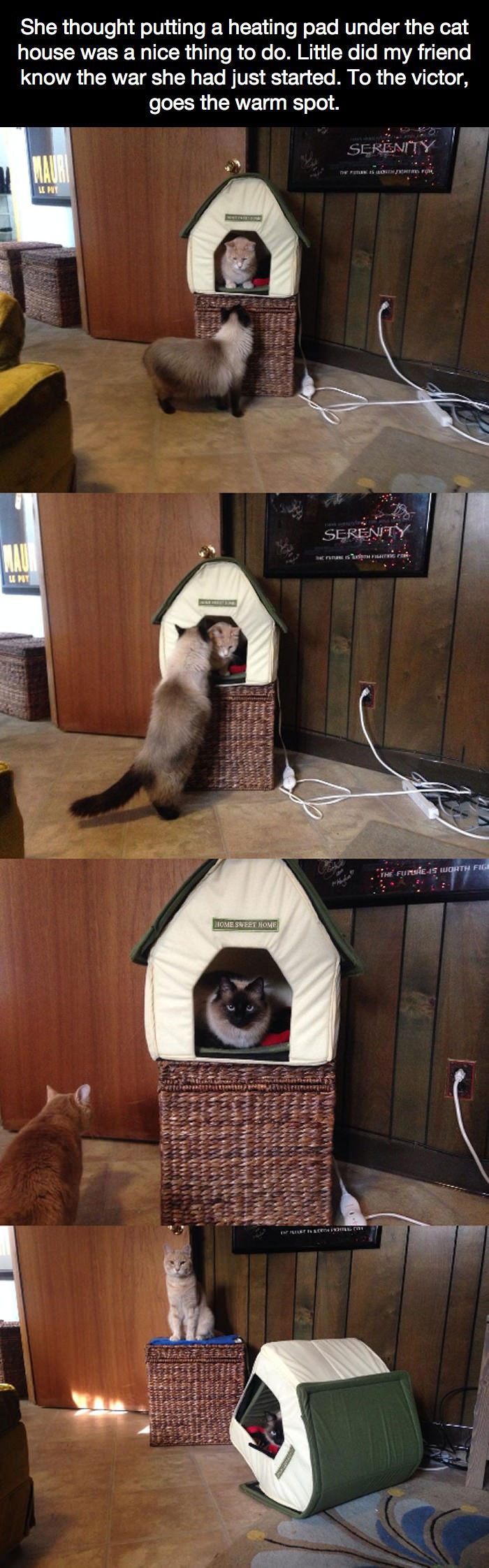 cat trolls other cat only to get trolled himself, story