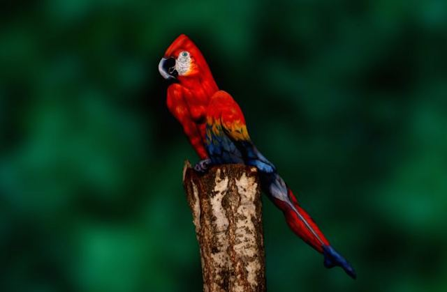 mind fuck, this parrot is a women posing in body paint