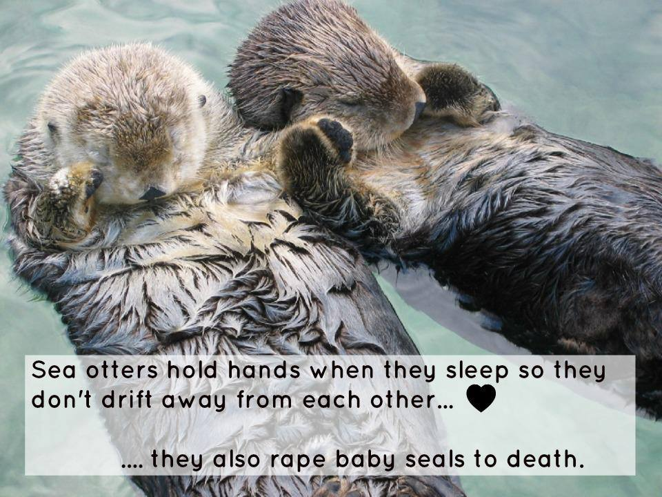 sea otters hold hands when they sleep so they don't drift away from each other, they also rape baby seals to death, dyk, animal kingdom facts