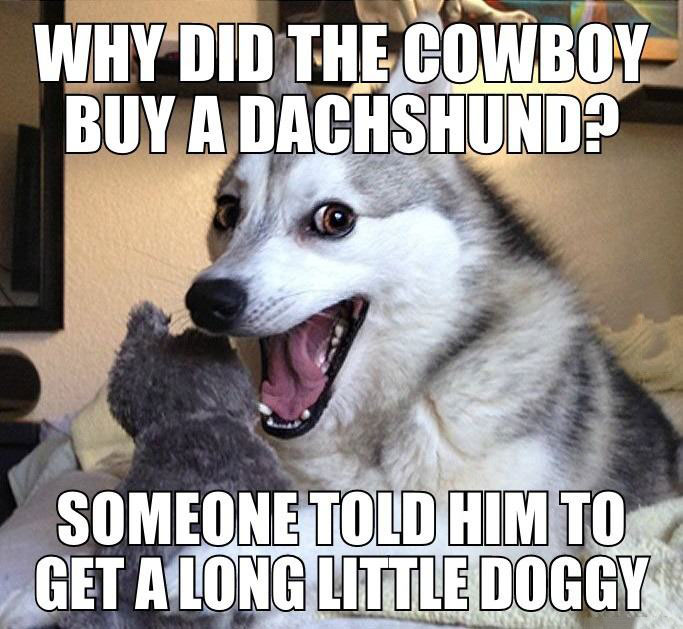 why did the cowboy buy a dachshund?, someone told him to get a long little doggy, joke, meme