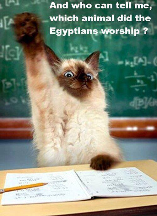 and who can tell me which animal did the egyptians worship?, cat raising hand
