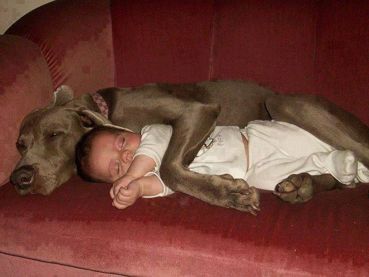 baby and dog spooning, cute