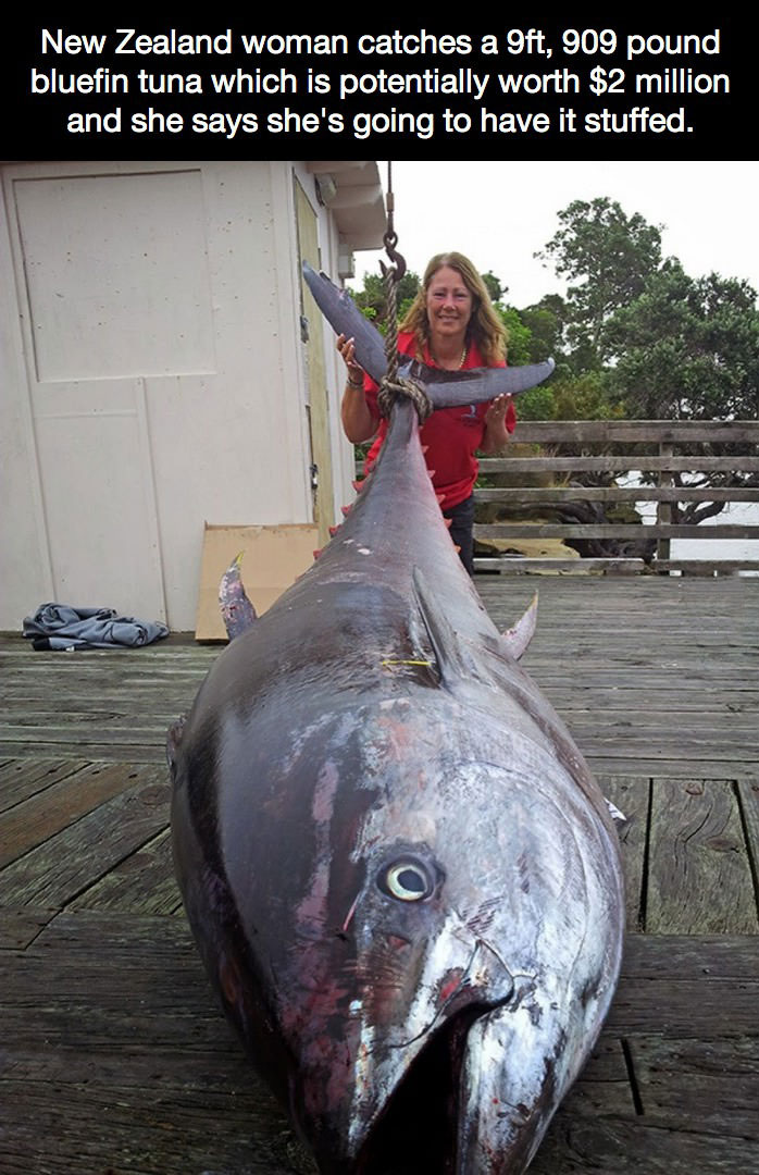 new zealand woman catches a 9ft 909 pound bluefin tuna which is potentially worth $2 million and she says she's going to have it stuffed