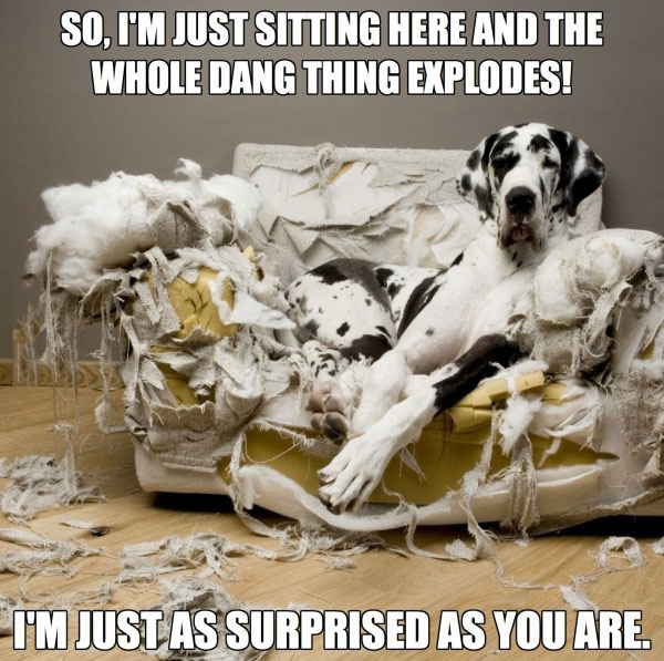 so i'm just sitting here and the whole dang thing explodes!, i'm just as surprised as you are, meme, bad dog, dalmation