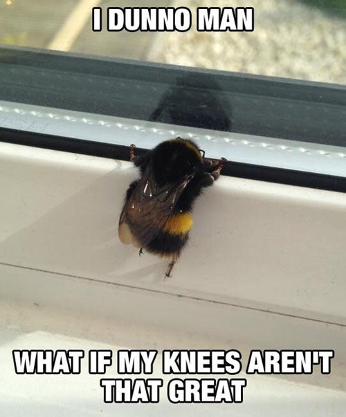 i don't know man, what if my knees aren't that great, meme, bumble bee