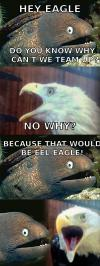 hey eagle do you know why we can't team up?, no why, because that would be eel-eagle, Why can't an eel and an eagle team up?, bad joke eel, meme