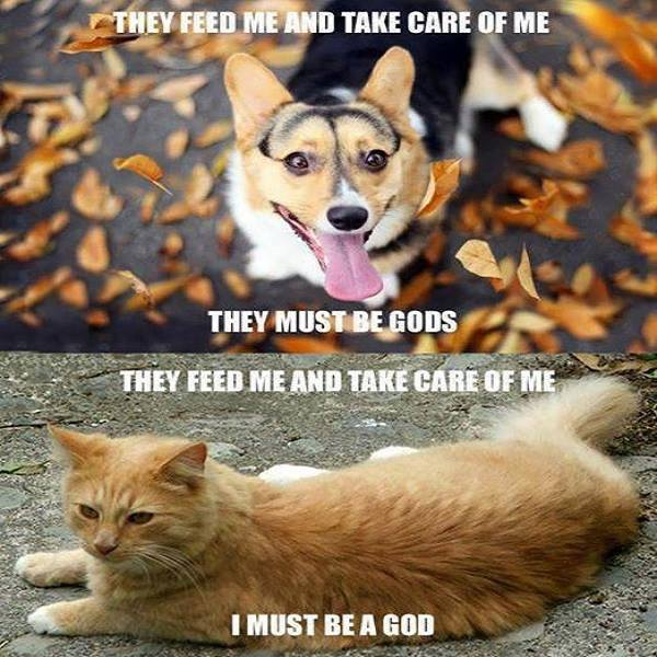 the difference between cats and dogs, they feed me and take care of me they must be gods, i must be a god