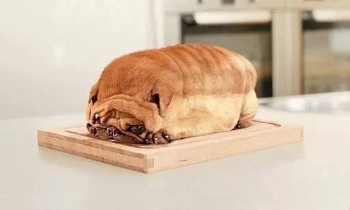 pug loaf, dog bread, wtf, food