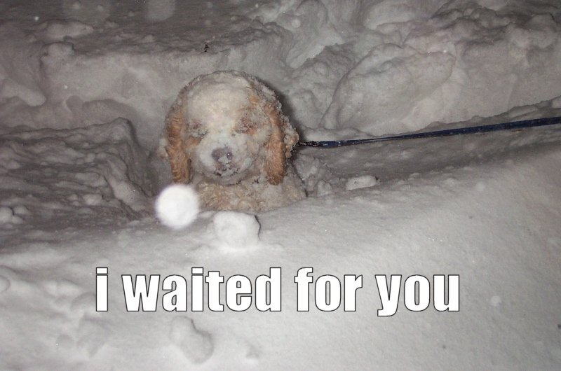 i waited for you, dog covered in snow, lol