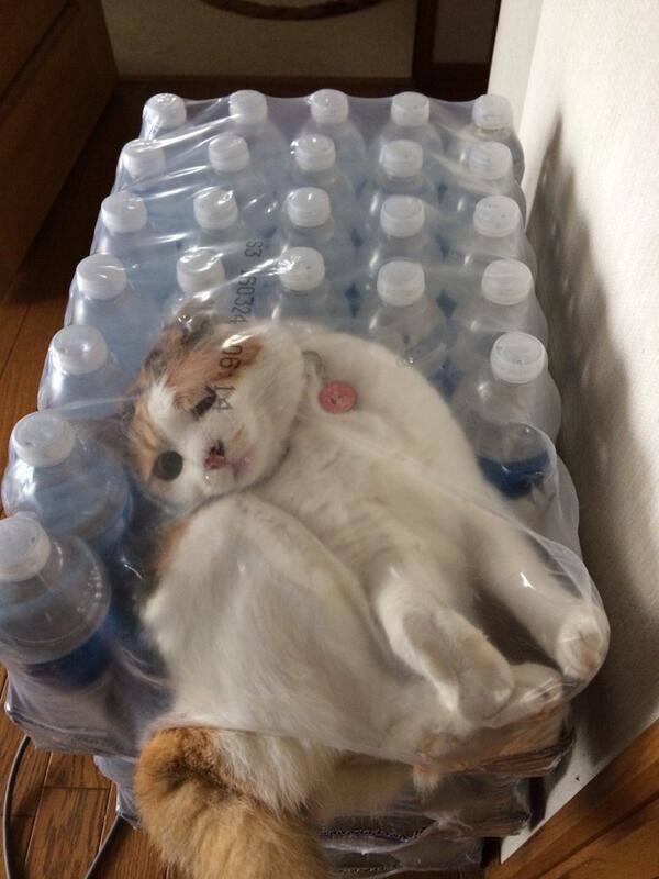 cat gets stuck in water bottle plastic