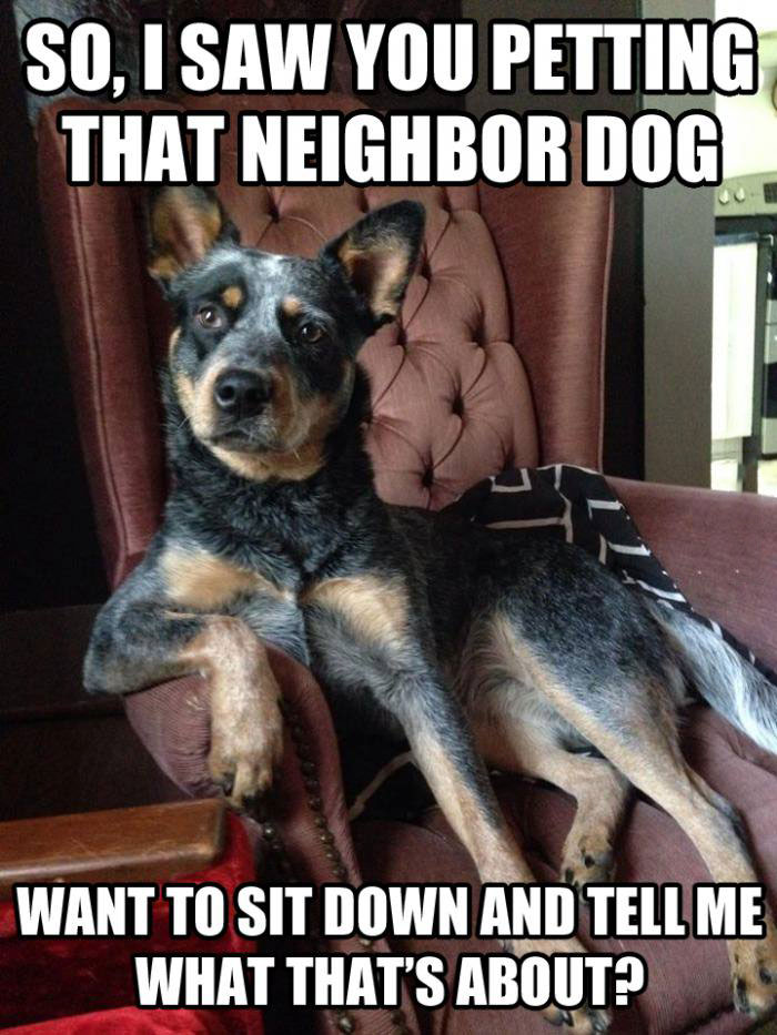 so i saw you petting that neighbor dog, want to sit down and tell me what's that about