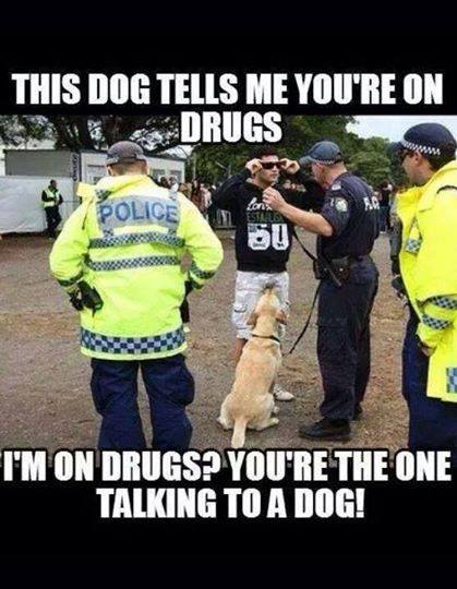 this dog tells me you're on drugs, i'm on drugs? you're the one talking to a dog, meme, lol