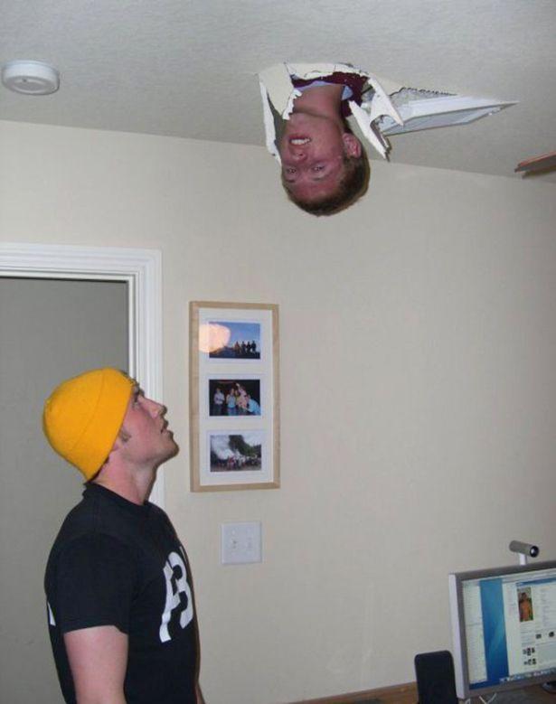 ceiling cat's owner: ceiling dude