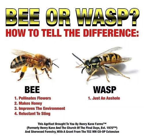 bee or wasp, know the difference, insects