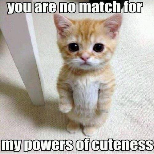 you are no match for my powers of cuteness, meme, kitten with big eyes standing on hind legs