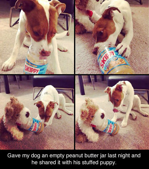 gave my dog an empty peanut butter jar last night and he shared it with his stuffed puppy