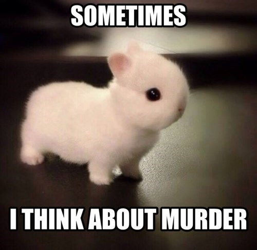 sometimes i think about murder, unexpected fluffy bunny thoughts, meme