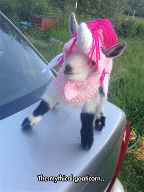 the mythical goaticorn, baby goat in a unicorn costume