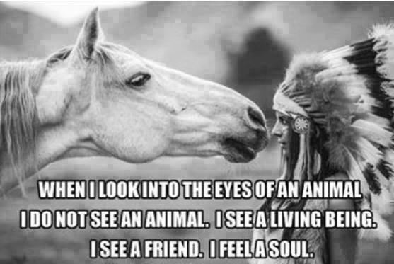 when i look into the eyes of an animal i do not see an animal, i see a living being, i see a friend, i feel a soul