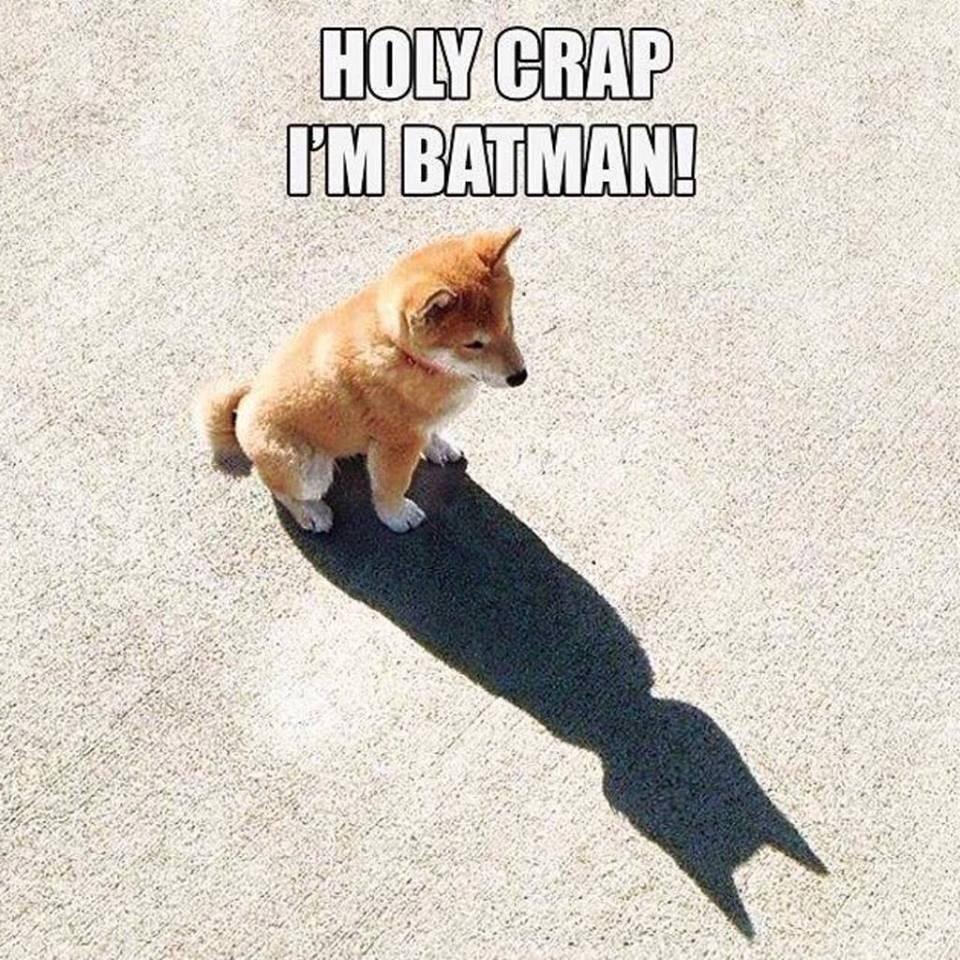 holy crap i'm batman!, dog, meme