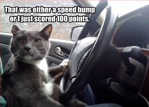 that was either a speed bump or i just scored 100 points, cat behind the wheel