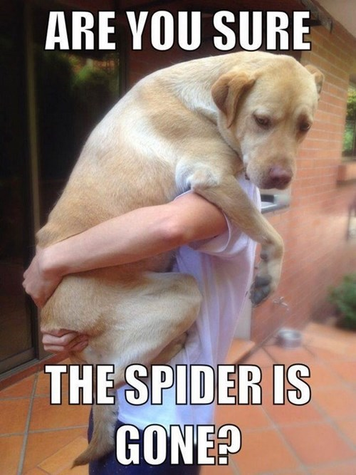 are you sure the spider is gone?, meme, dog in man's arms