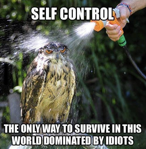 self control, the only way to survive in this world dominated by idiots