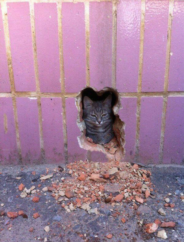 that's one vicious cat, hole in wall shaped like a feline
