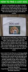 how to find a lost dog, the best way to get your dog back