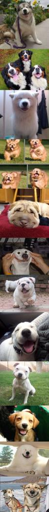 the 10 happiest dogs you will ever see, cute