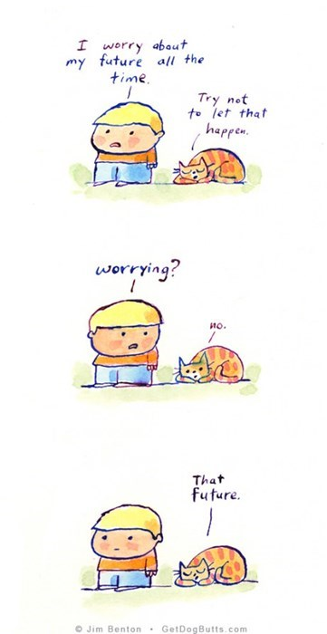 cats and their advice on life, try not to let that happen