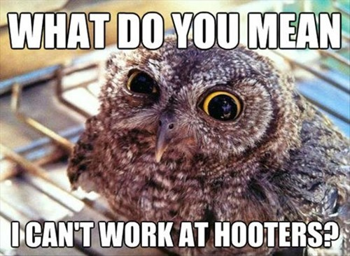 what do you mean i can't work at hooters, owl, meme