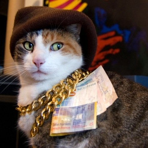bling cat sporting gold chains and cash