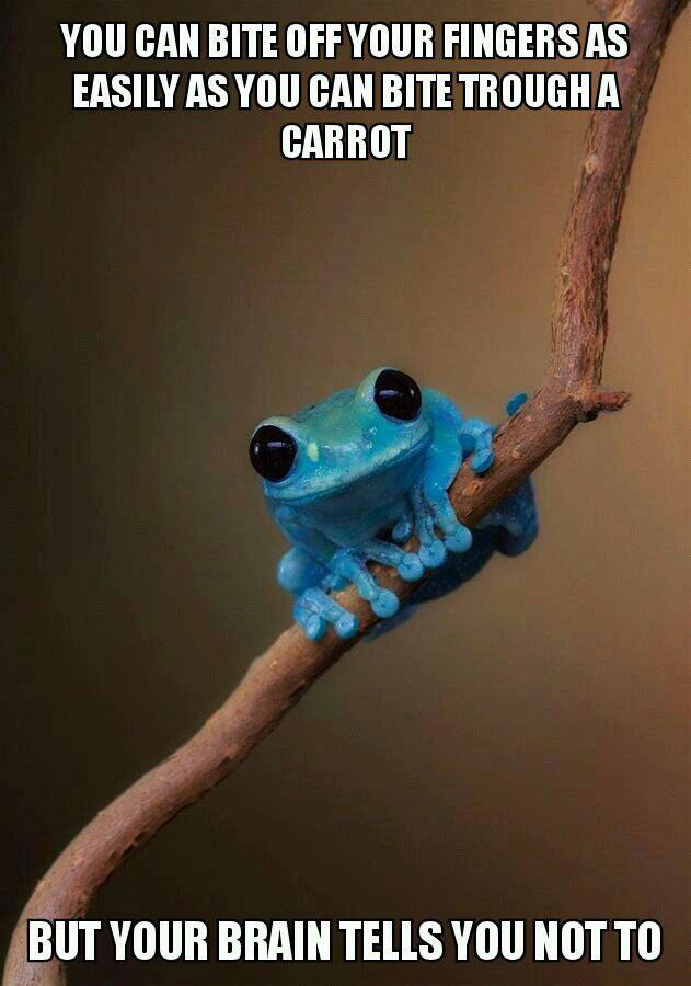 you can bite off your fingers as easily as you can bite through a carrot, but your brain tells you not to, meme, small fact frog