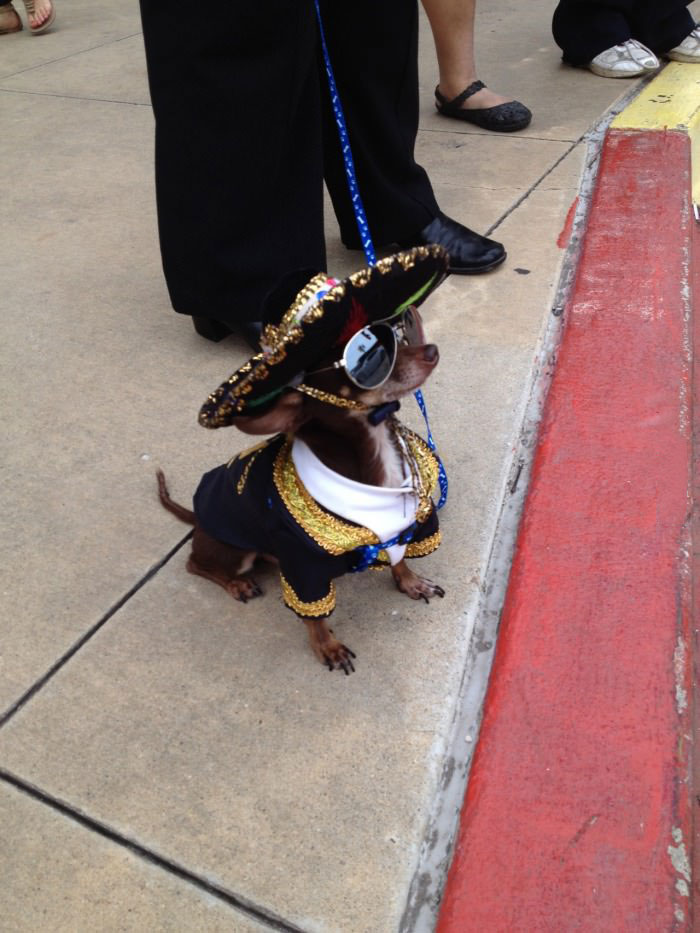 mexican mariachi puppy, dog, lol, wtf