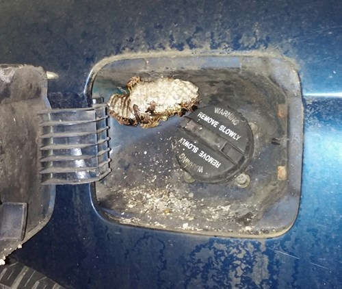 bee hive inside gas tank door, scary shit