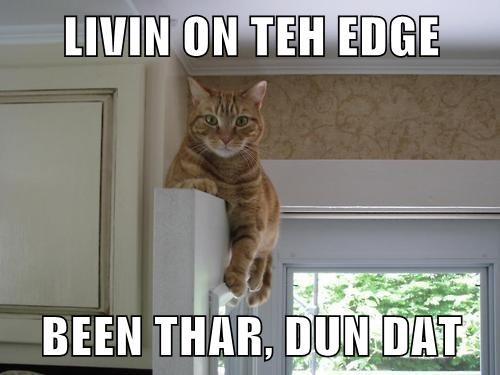 living on the edge, been thar dun that, cat meme