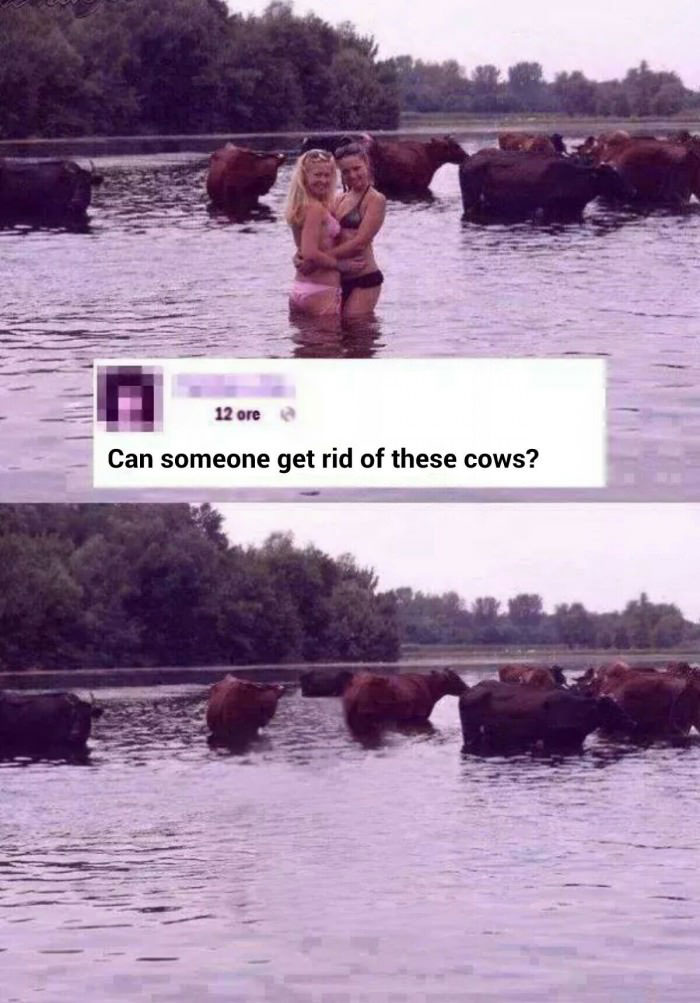 can someone get rid of these cows?, photoshop, the internet is mean