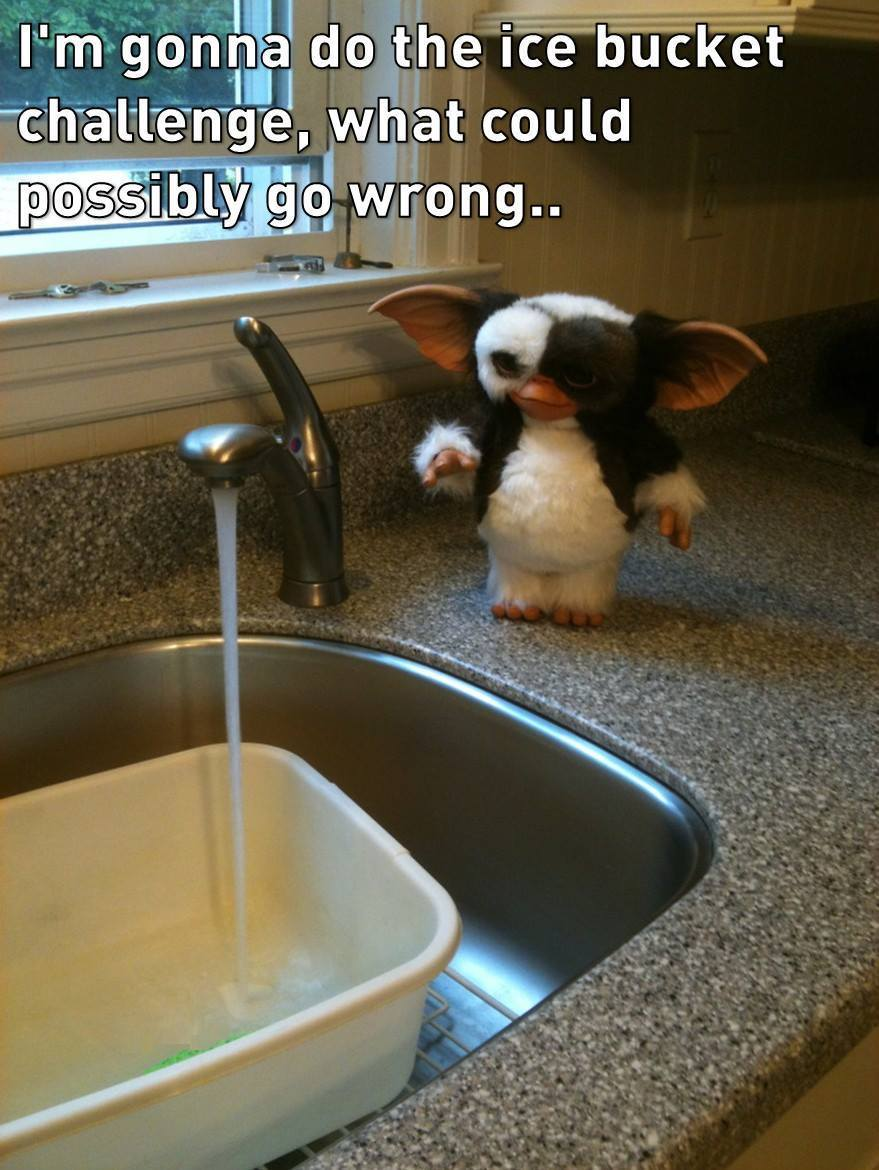 i'm gonna do the ice bucket challenge, what could possibly go wrong, gremlins