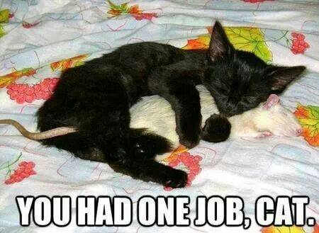 you had one job cat, kitten spooning a rat, meme
