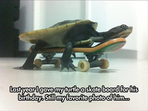 last year i gave my turtle a skateboard for his birthday, this is still my favorite photo of him