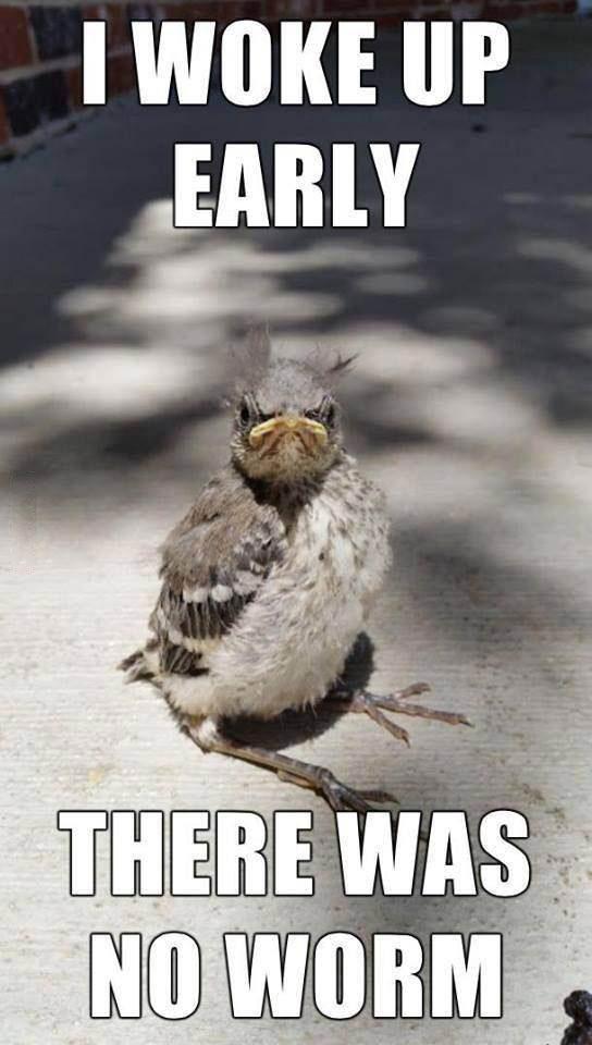 i woke up early, there was no worm, meme, disheveled bird