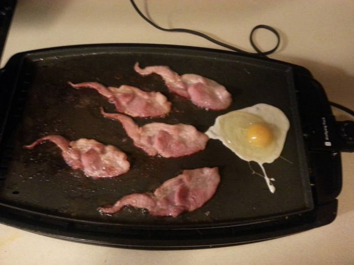 i made breakfast for my boyfriend, do you think he'll get the hint, eggs and bacon shaped like sperm swimming towards the egg
