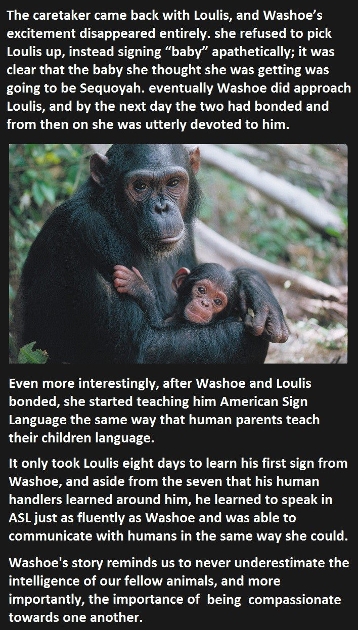 this is why you should never underestimate animals