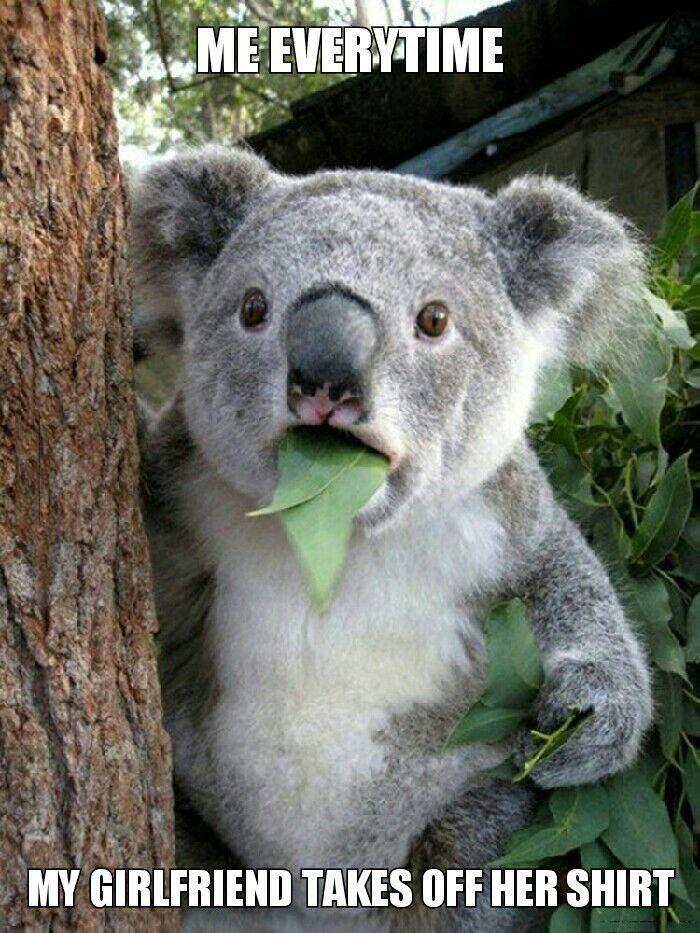 me overtime my girlfriend takes off her shirt, surprised koala meme