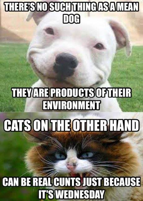 there's no such thing as a mean dog, they are products of their environment, cats on other hand can be real c**ts just because it's wednesday, meme