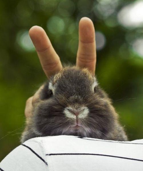 bunny ears on a bunny